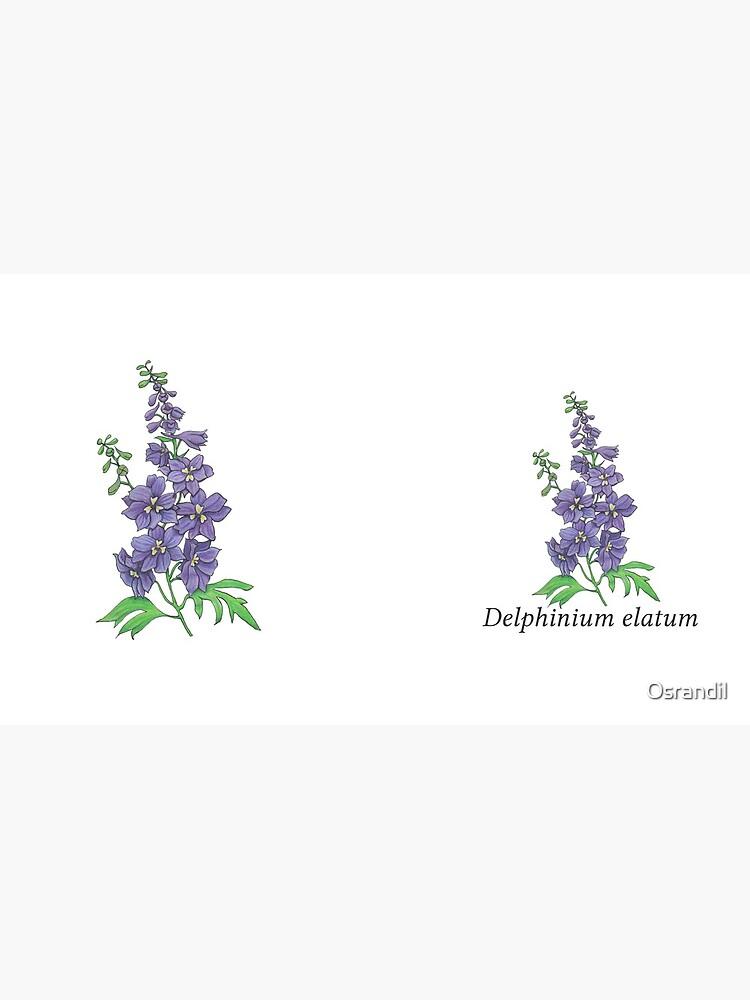 Delphinium elatum by Osrandil