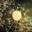 Dandelion Clock by Sybille Sterk