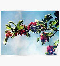 Pink Hawthorn Poster
