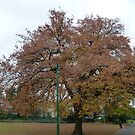 Oak in City Park by DEB CAMERON
