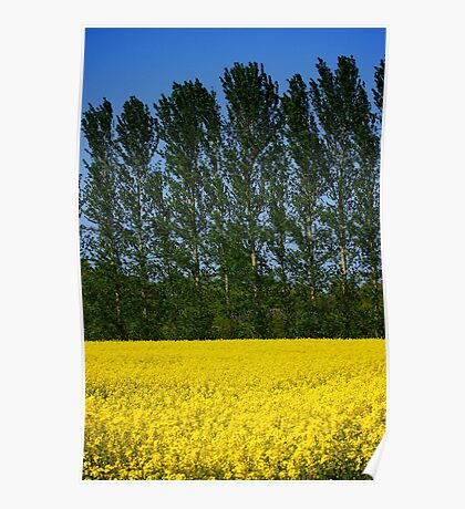 Spring Gold Fields Poster