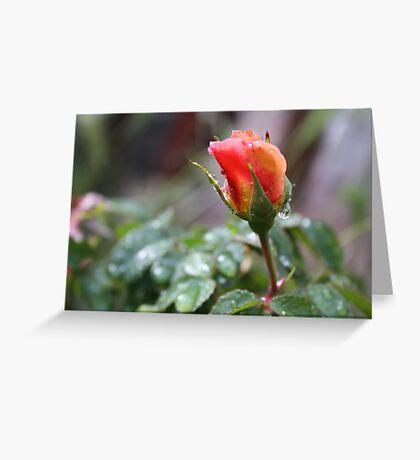 RAIN DROP'S ON PEACH ROSE  Greeting Card