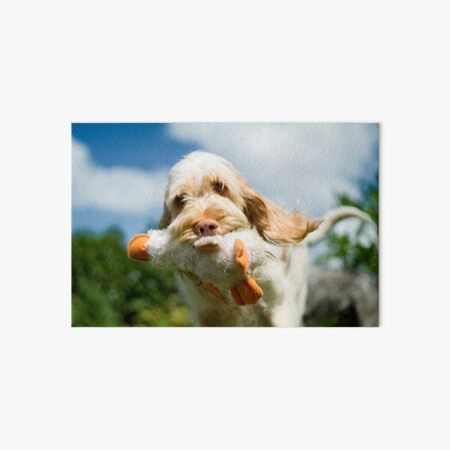 Brought you a duck Spinone Art Board Print