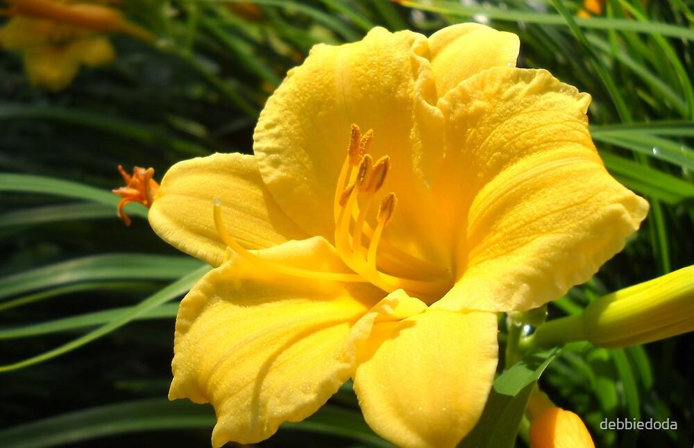 Day Lily by debbiedoda