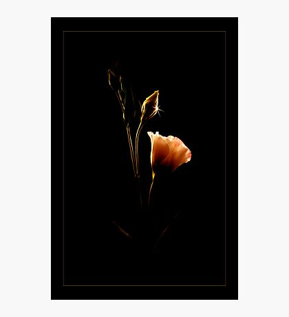 From Shadows To Light  Photographic Print