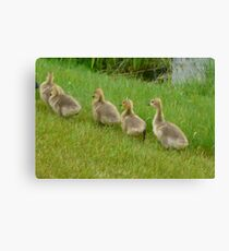 5 little Soldiers,Marching Along...Goslings Canvas Print