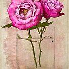 Roses Muriel Robin by Leslie Nicole