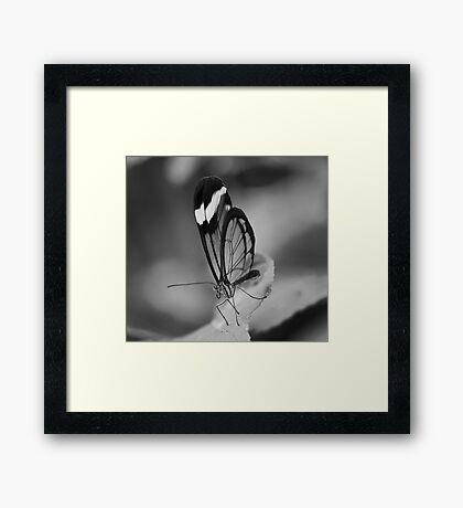 Glass Wing Framed Print