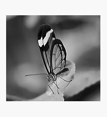 Glass Wing Photographic Print