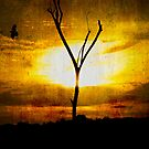 Lonely bird! by vasu