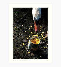 Hungry Swan Art Print