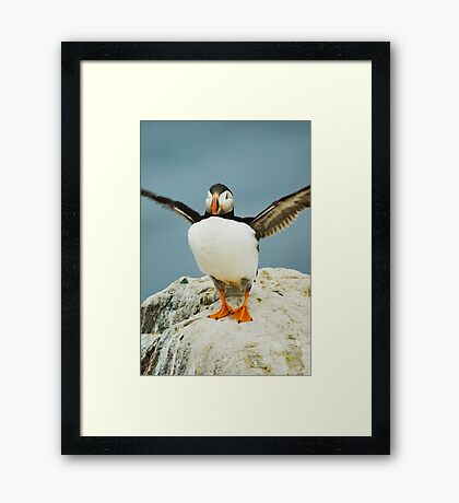 If I flap harder will I fly     Puffin_(disambiguation) Framed Print