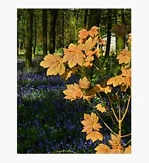 New Life-Spring in England Photographic Print