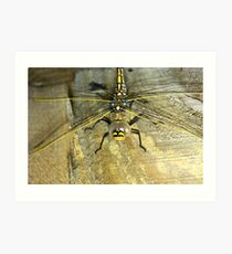 Dragonfly up close Art Print