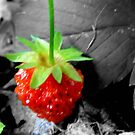 Yummy Strawberries..Just Can't Wait! by MaeBelle