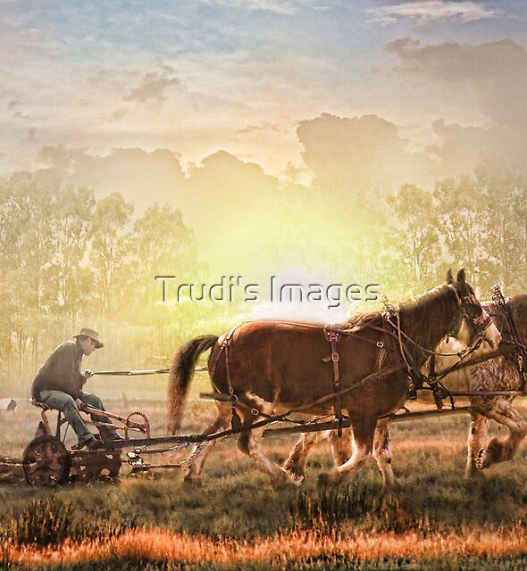 Life in the Sun by Trudi's Images