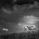 sheep clouds by Dorit Fuhg