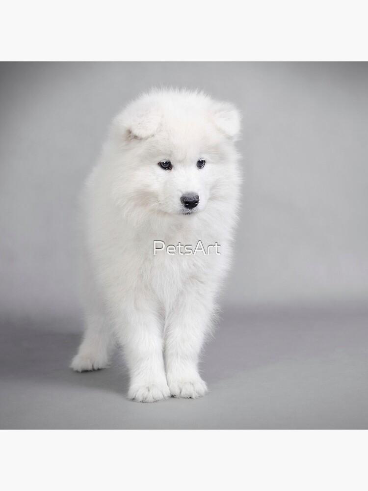 Samoyed puppy by PetsArt