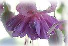 Pastel Fuchsia Dream by Tori Snow