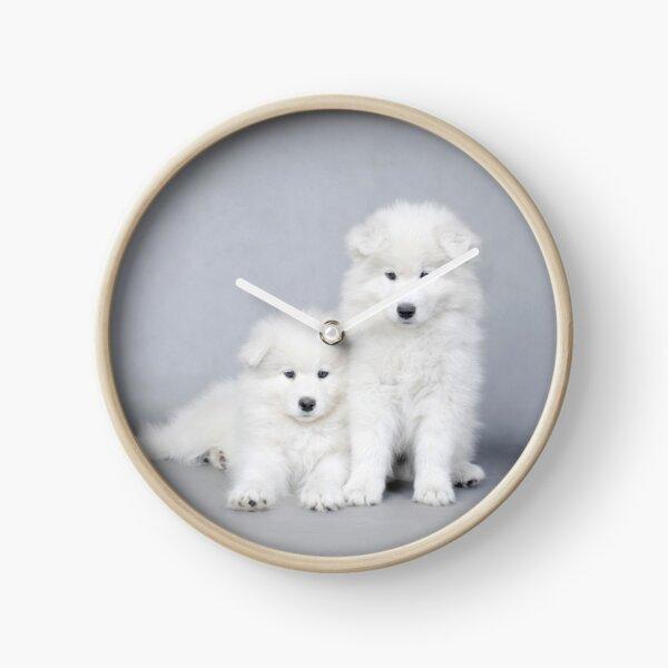Samoyed puppies  Clock