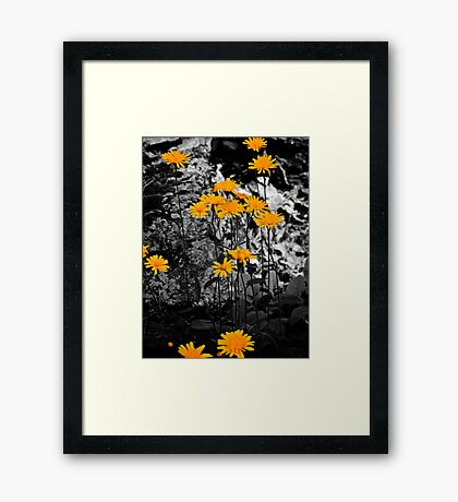 Dandy Lions Framed Print