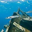 Barracudas, Arimoroa Wreck, Egg Island, Eleuthera, Bahamas by Shane Pinder