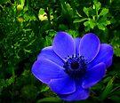 Hidden Blue by Penny Kittel