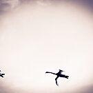 Three Swans by Richard Pitman