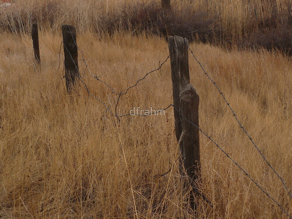 """""""Old Barbed Wire Fence Line"""" by dfrahm"""