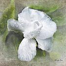 Good Morning Gardenia by Carolyn Staut