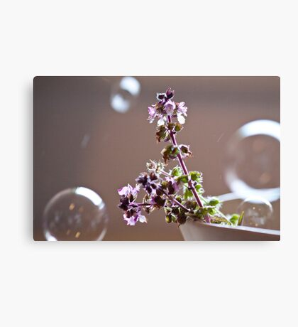 basil and bubbles Canvas Print