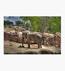 Painted Elephant Eating Photographic Print