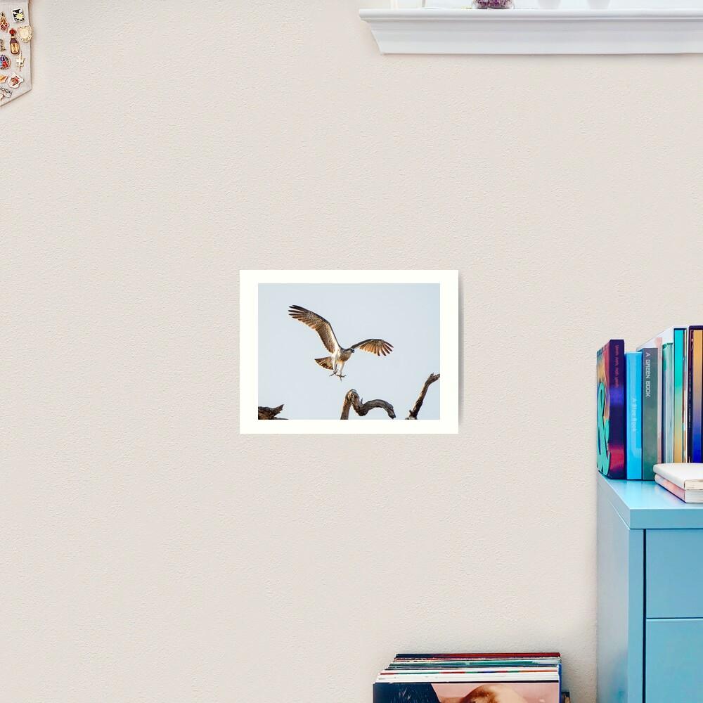 Eastern Osprey Art Print