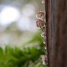 white fungi on gum by Hege Nolan