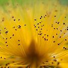 Yellow Pom Pom by Jenni77
