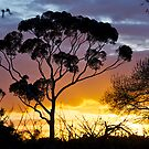 Sunset, RIP, Eucalyptus, Australia. by johnrf
