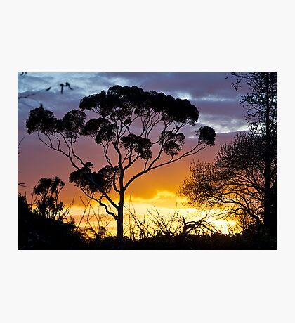 Sunset, RIP, Eucalyptus, Australia. Photographic Print