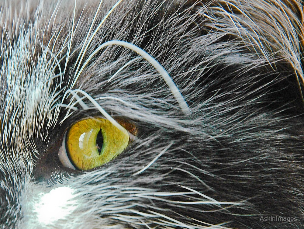 Through the cat's eye by AskinImages