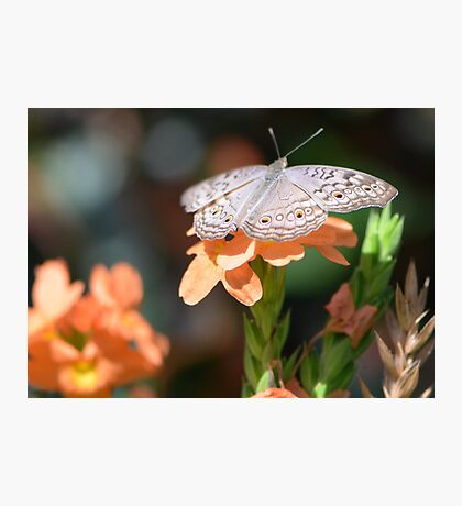 Beige colored butterfly with tropical flowers Photographic Print