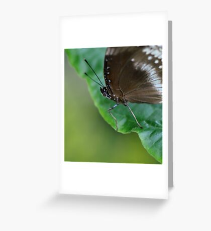 Black and Grey Blue Butterfly Greeting Card