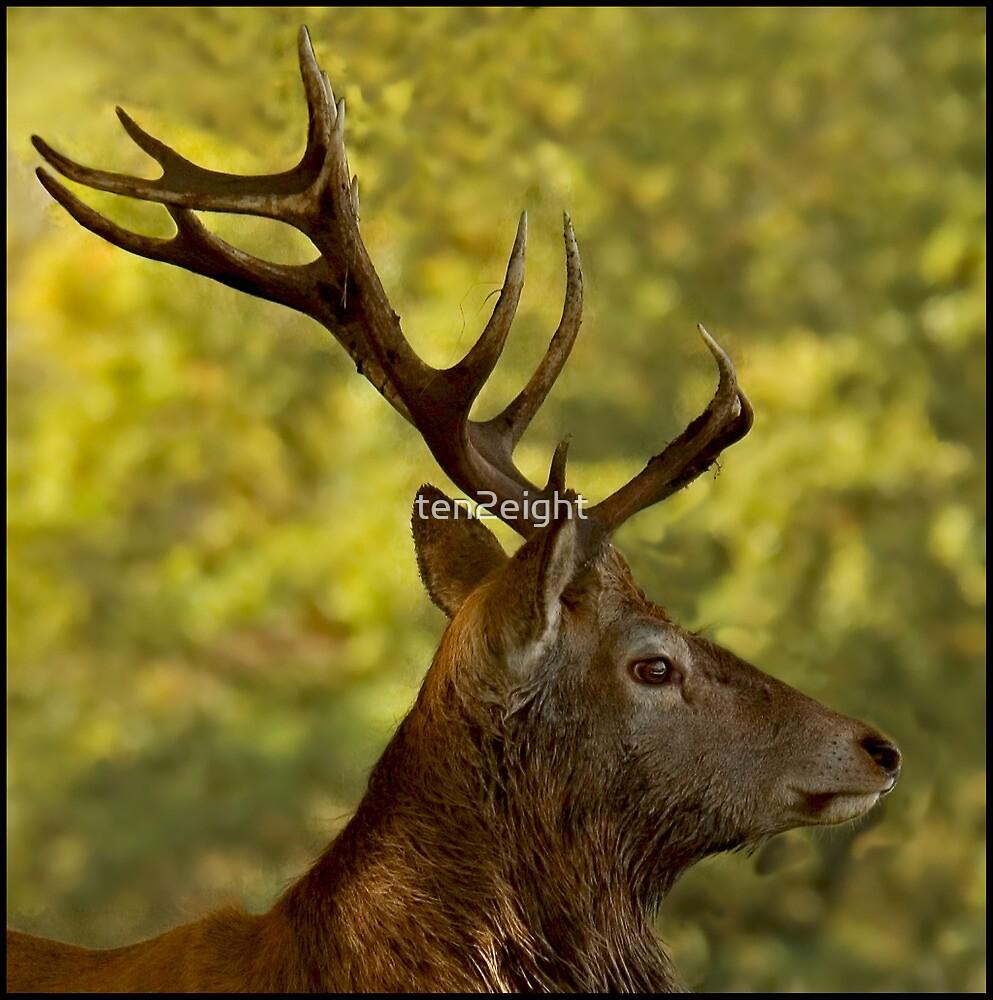 Royal Stag Profile\