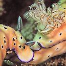 Nose to tail - sea slugs by shellfish