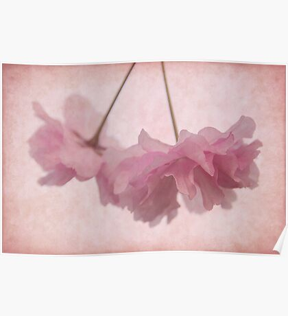 Cherry Blossom Froth Poster
