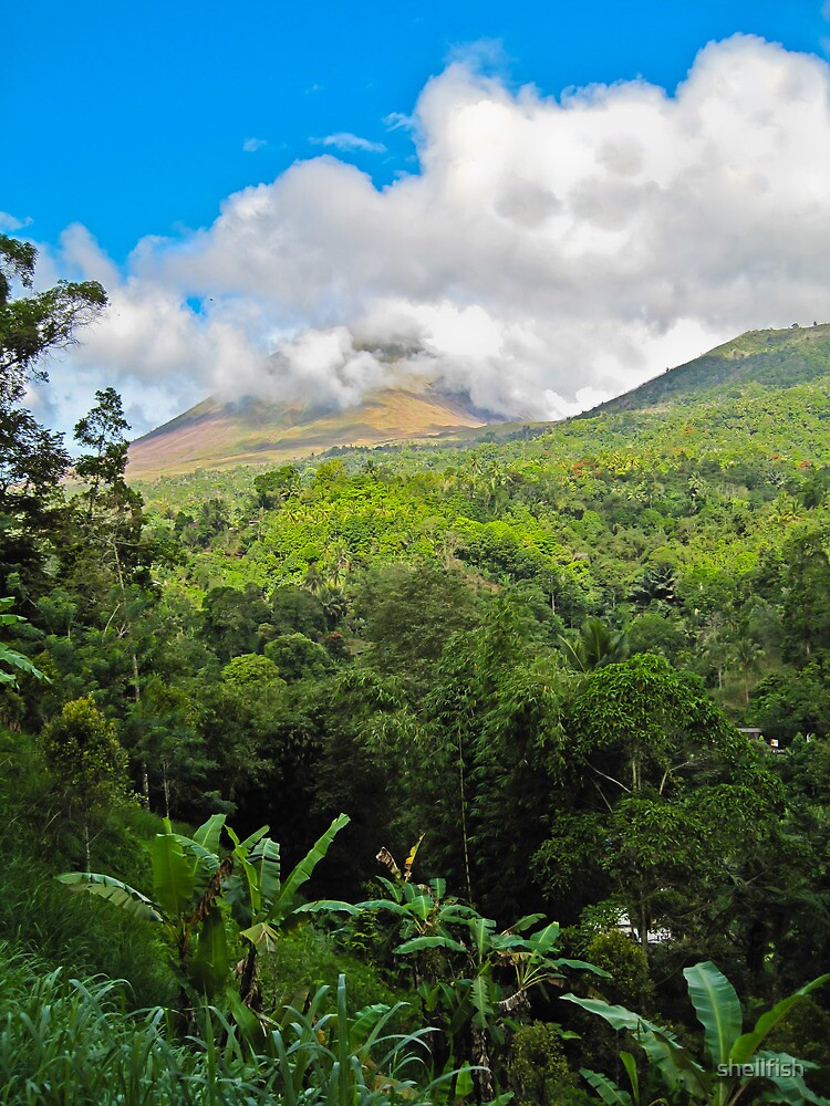 Sulawesi  -  forest & clouds by shellfish