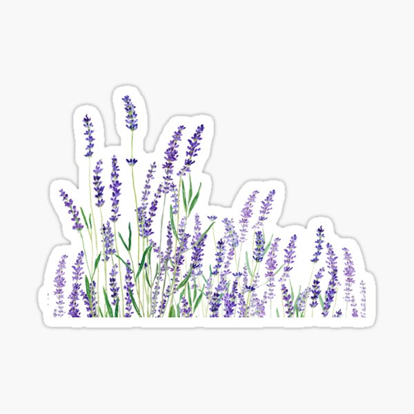 purple lavender horizontal watercolor Sticker