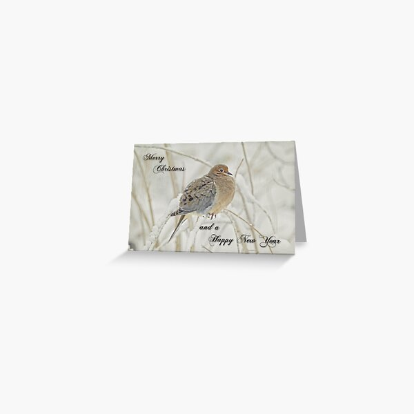 Christmas and New Year Greeting - Mourning Dove Greeting Card