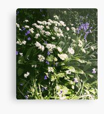 Wild Garlic in the garden Metal Print