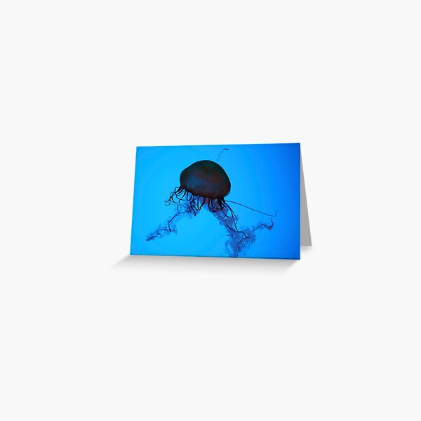 Sea Nettle Greeting Card