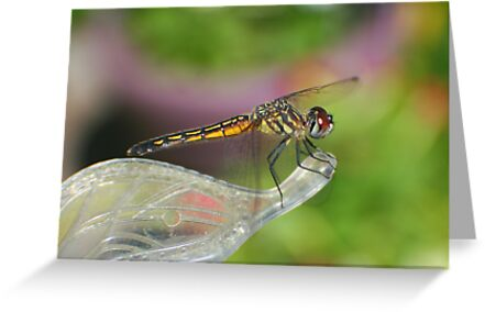 Dragonfly by Karen K Smith