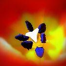 tulip II by Floralynne
